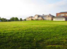 dbanie o trawnik